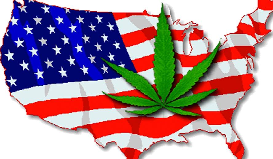 Hollywood Insider Messages From America, Should Marijuana Be Legalized in All 50 States Photo