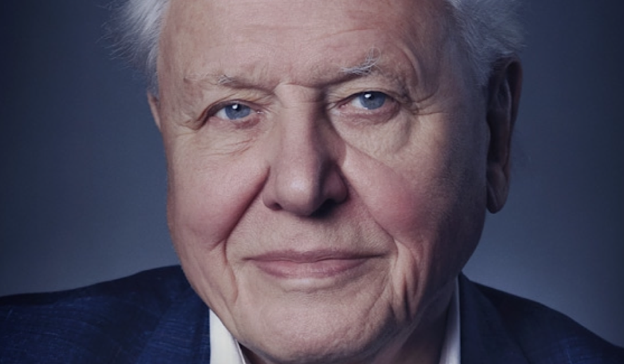 Hollywood Insider A Life on Our Planet, David Attenborough, Netflix,
