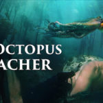 'My Octopus Teacher': The Emotional Nature Documentary We Need - A Meditative Experience