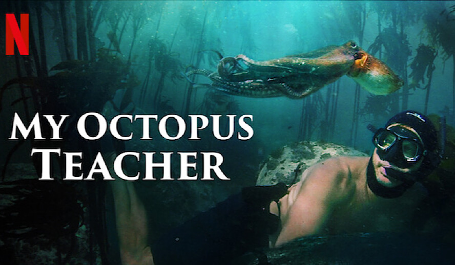 Hollywood Insider My Octopus Teacher, Netflix, Review, Nature Documentary