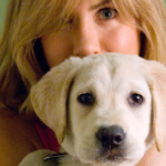 10 Must-Watch Animal Movies - Pets in Film: A Look at What Animals Bring to Film