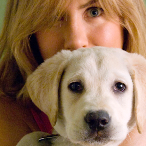 10 Must-Watch Animal Movies – Pets in Film: A Look at What Animals Bring to Film