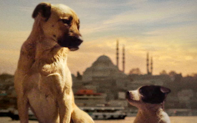 'Stray' is a Heart-Wrenching Look at Society Through Its Stray Dogs That Don't Have A Human Family