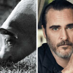 Joaquin Phoenix's 'Gunda' is a Meditative Documentary To Experience Farm Animals On Their Own Terms