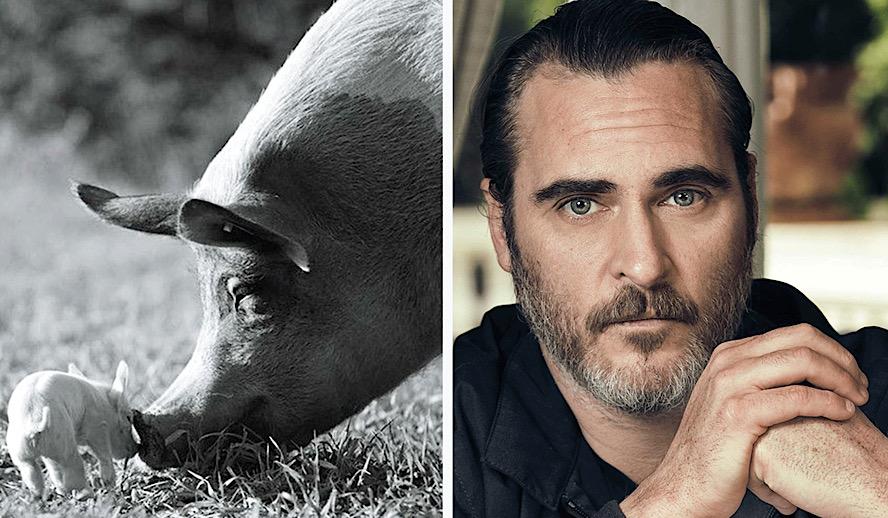 Joaquin Phoenix's 'Gunda' is a Meditative Documentary To Experience Farm Animals On Their Own Terms