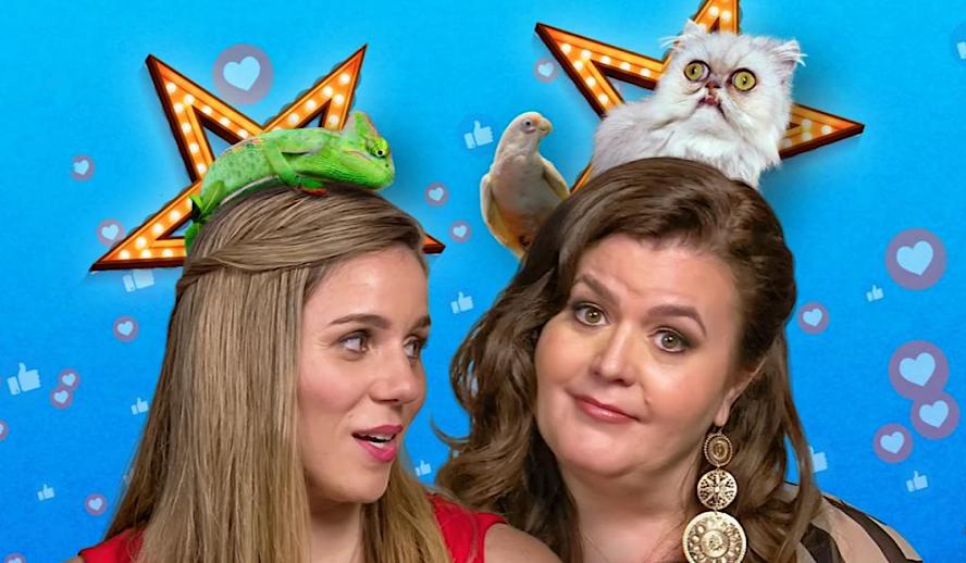 Hollywood Insider Pet Stars Review, Netflix
