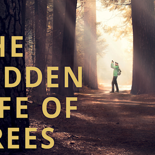 'The Hidden Life of Trees' Review: A Cyclical Documentary About Our Roots and Life