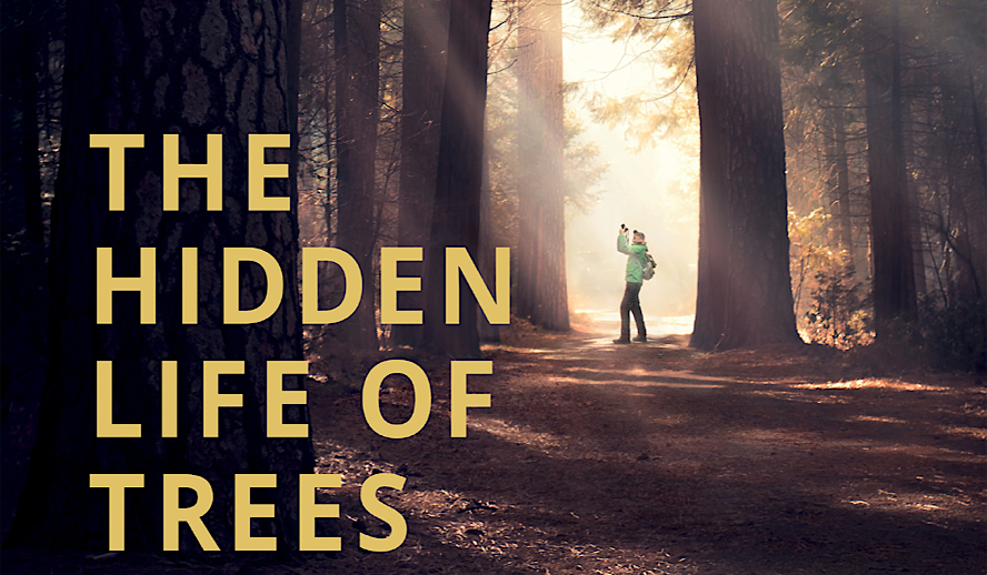 Hollywood Insider The Hidden Life of Trees Review, German Documentary