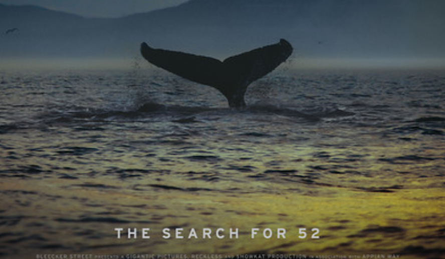 Hollywood Insider The Loneliest Whale: The Search for 52 Review, Joshua Zeman, Animal Documentaries